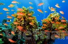 Khai mạc Hội nghị bảo tồn nguồn cá thế giới