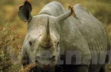 Nam Phi đẩy mạnh phòng chống săn bắn tê giác