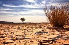 Sa mạc hóa đe dọa gần một tỷ người trên Trái Đất