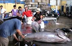Ngư dân Phú Yên có lãi từ vụ câu cá ngừ đầu năm