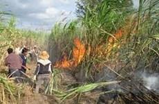 Hàng trăm hécta mía bị cháy, thiệt hại 13 tỷ đồng