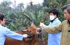 Hỗ trợ vắcxin chống dịch bệnh lở mồm long móng