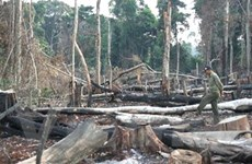 Bình Phước sẽ xử lý tổ chức, cá nhân để mất rừng