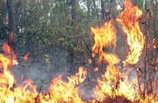 Phú Yên: Một tuần xảy ra 4 vụ cháy rừng trồng