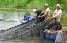 Kiên Giang: Bùng phát đánh bắt hủy diệt thủy sản