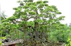 Phú Yên triển khai dự án trồng cây cảnh xuất khẩu