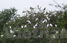 Xây dựng vườn cò Đông Xuyên thành điểm du lịch