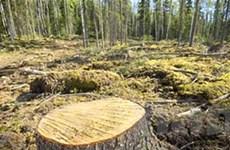 Vấn nạn phá rừng đang đe dọa toàn bộ hành tinh