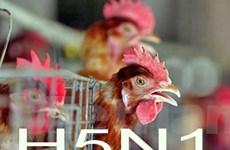Trung Quốc phát hiện ca nghi nhiễm virus H5N1