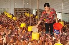 Hà Nội đảm bảo nguồn cung sản phẩm chăn nuôi