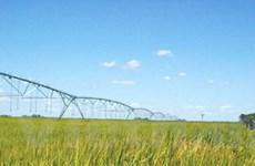 Brazil bắt đầu thử nghiệm sản xuất ethanol từ gạo
