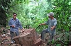 Rừng nghiến ở Ba Bể đang tiếp tục bị tàn phá nặng