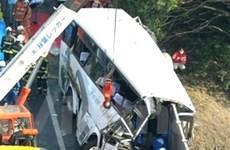 Nhật điều tra vụ tai nạn xe buýt làm 7 người chết