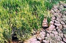 Sản xuất nông nghiệp bị ảnh hưởng do nắng nóng