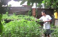 Trồng thành công rau xanh ở huyện đảo Trường Sa