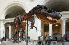 Mỹ thu giữ được một bộ xương khủng long Mông Cổ