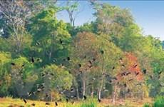 Đồng Nai: Thách thức trong bảo tồn đa dạng sinh học