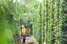Đề nghị WB hỗ trợ tiếp tái cơ cấu ngành nông nghiệp