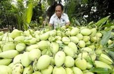 Các loại trái cây chủ lực của ĐBSCL tiêu thụ mạnh