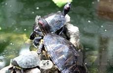 Ngăn ngừa sinh vật ngoại lai xâm hại ở Việt Nam