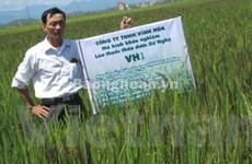 Nghệ An nghiên cứu thành công giống lúa thảo dược