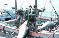 FAO thông qua nguyên tắc chống đánh cá trái phép