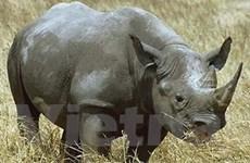 Ra mắt bộ phim kêu gọi không sử dụng sừng tê giác