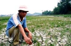 Tỉnh Đắk Nông cần hỗ trợ 130 tỷ đồng để chống hạn