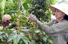 Châu Âu đề nghị Việt Nam điều tra gian lận thuế càphê