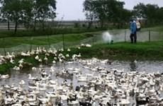 Dịch cúm gia cầm xuất hiện ở Hà Nam và Bắc Kạn