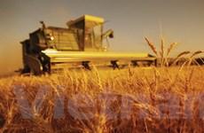 Trợ giá nông nghiệp gia tăng tại các nước phát triển