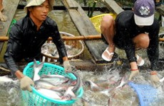 Xây dựng tiêu chuẩn nuôi cá tra, basa toàn cầu