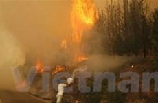 Hy Lạp ban bố tình trạng khẩn cấp vì cháy rừng