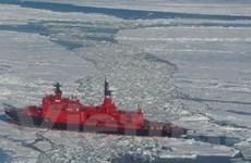Nga khảo sát hệ sinh thái Bắc cực ở vĩ độ cao