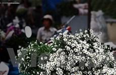 Chợ hoa đêm Quảng An - nhộn nhịp mà yên bình