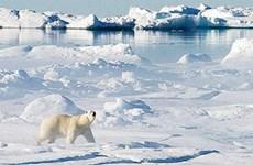 Từ 2020, Bắc Cực không còn băng vào mùa hè