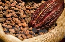 Tiền đổ về thị trường cà phê, đường và cacao