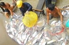ĐBSCL phát triển các loài thủy sản tiêu thụ mạnh