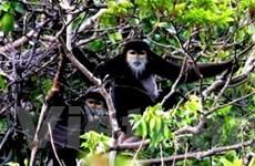 Người dân chung tay bảo tồn thiên nhiên Tà Cú