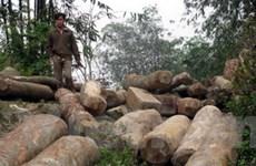 Thái Nguyên khẩn trương bảo vệ rừng Võ Nhai