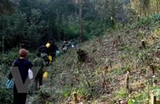 Nắng nóng và khô đe dọa các cánh rừng Lào Cai