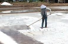 Diêm dân Trà Vinh lại lao đao vì giá muối thấp