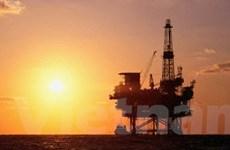 OPEC: Quá sớm để bàn cách ngăn dầu giảm giá
