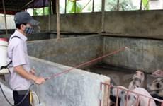 Kiến nghị thống nhất mức hỗ trợ gia súc tiêu hủy