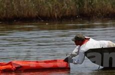 Mỹ mở điều tra hình sự vụ tràn dầu ở vịnh Mexico