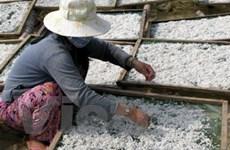 Ngư dân Phú Yên trúng đậm vụ cá cơm, cá trích