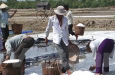 Ninh Thuận khởi động đợt mua muối của diêm dân