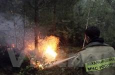 Khô hạn nặng tại Nga, cháy rừng hoành hành dữ dội