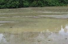 Bắc Kạn: Lũ quét gây thiệt hại nặng ở huyện Ba Bể