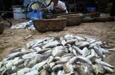 Tỉnh Kiên Giang thí điểm xuất khẩu mặt hàng cá nóc